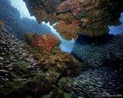 Minnows in the Grotto