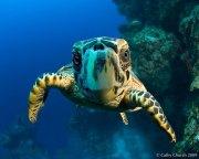 Nosy Turtle